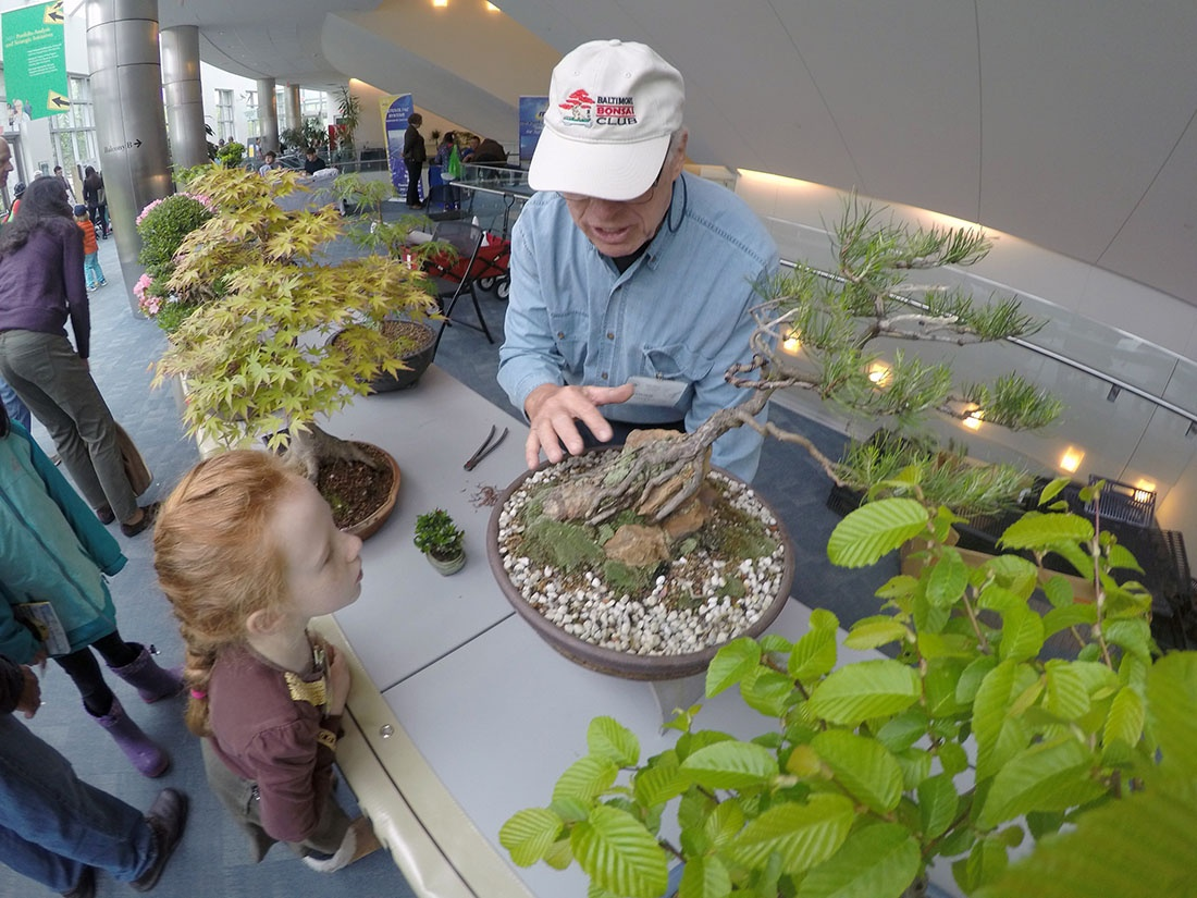 A girl looks as a man shows her bonsai trees at the NIH Earth Day event
