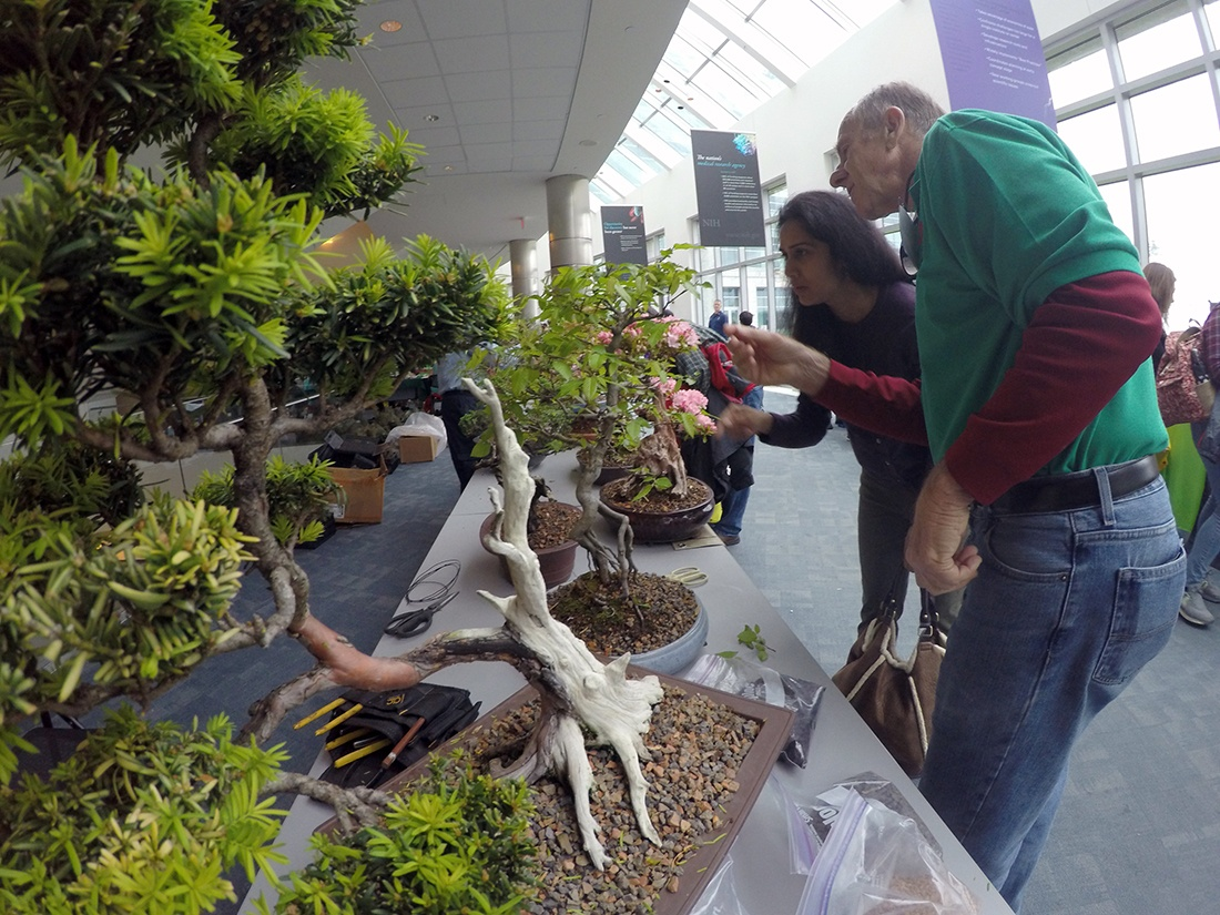 A man and woman look at bonsai trees at the NIH Earth Day event
