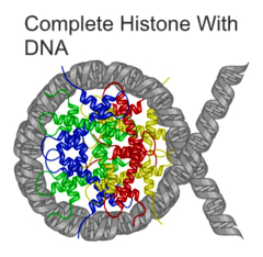 Histone with DNA